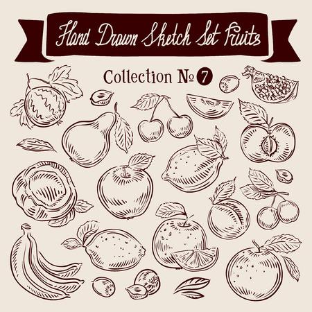 grosella: colección de dibujado a mano de la fruta. bosquejo. ilustración vectorial