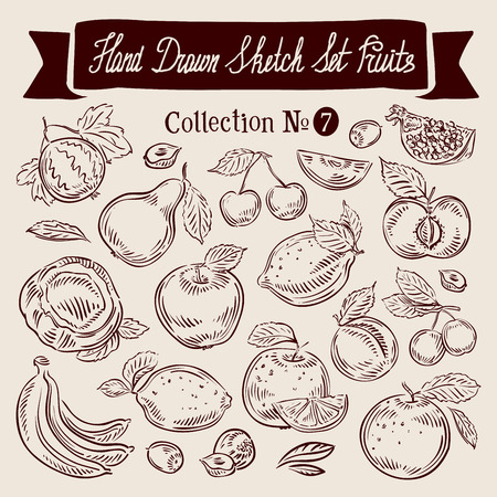 food illustration: hand-drawn collection of fruit. sketch. vector illustration