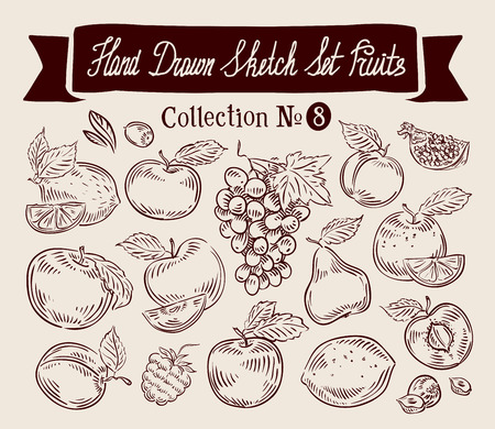 vine pear: hand-drawn collection of fruit. sketch. vector illustration
