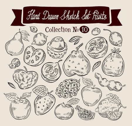tamarindo: colección de dibujado a mano de la fruta. bosquejo. ilustración vectorial