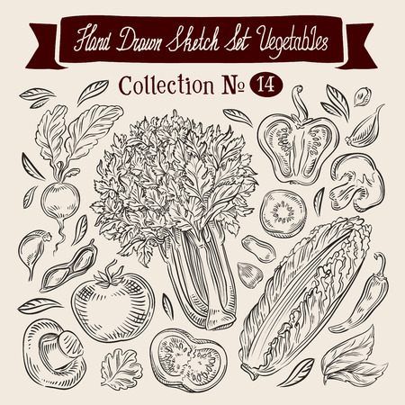 seasoning: hand-drawn collection of vegetables. sketch. vector illustration Illustration
