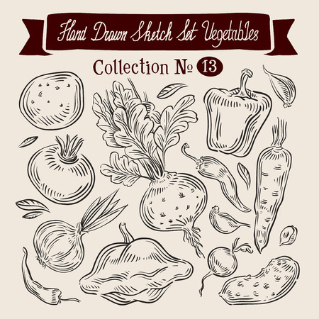 gherkin: hand-drawn collection of vegetables. sketch. vector illustration Illustration