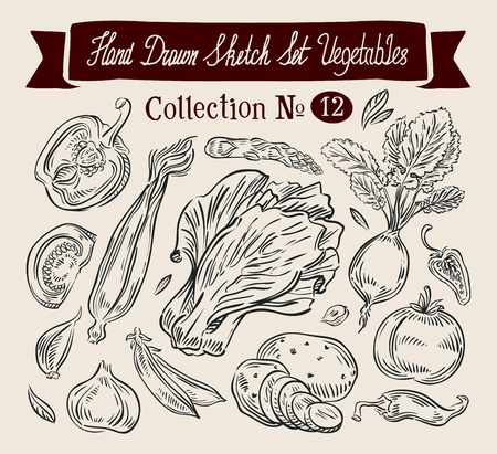 gastronome: hand-drawn collection of vegetables. sketch. vector illustration Illustration