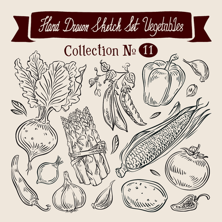 maize: a collection of vegetables. sketch. vector illustration
