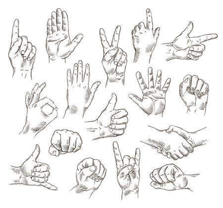 Conjunto del vector de las manos y los gestos - Ilustración del esquema