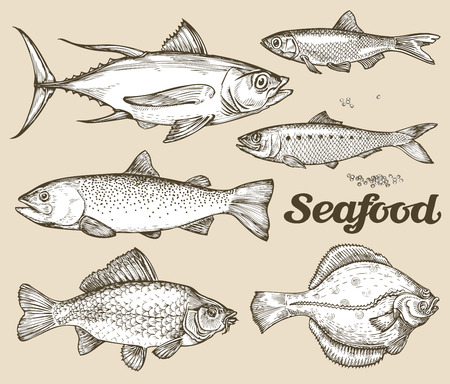 atún: colección de diferentes peces