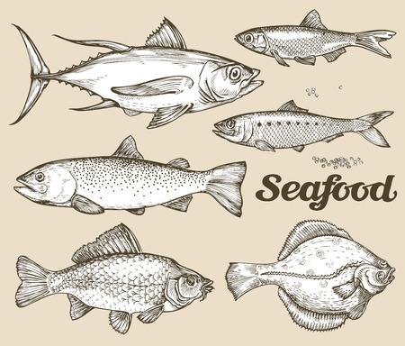 Sammlung von verschiedenen Fischen Standard-Bild - 54421619