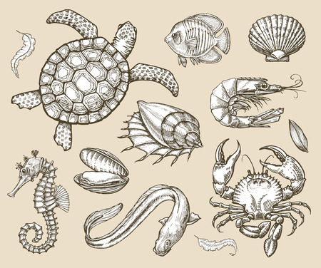 fishing area: collection of marine animals Illustration