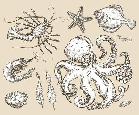 plaice: collection of marine animals Illustration