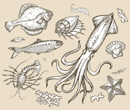 collection of animals of the underwater world.