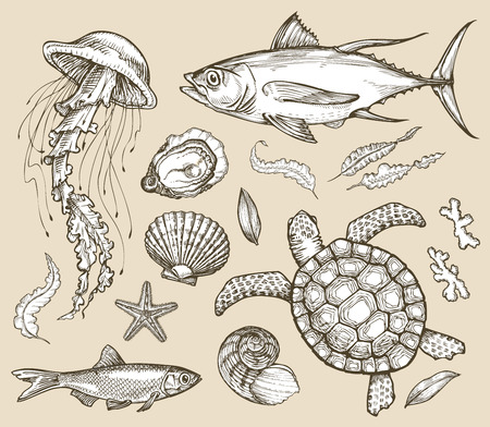 seagrass: collection of marine animals Illustration