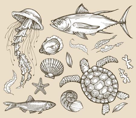 sea grass: collection of marine animals Illustration