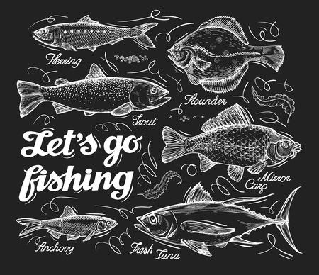 outline fish: different species of fish sketch. illustration