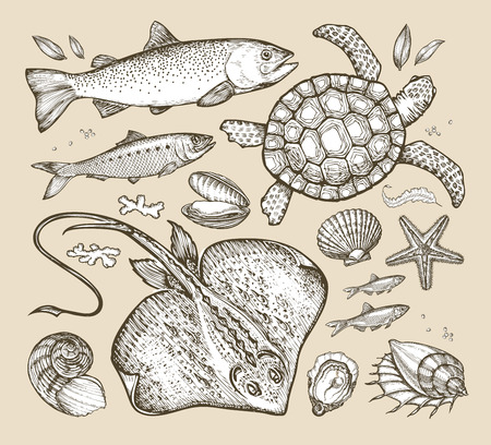 anchovy: hand drawn sketches sea animals. vector illustration
