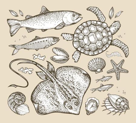 hand drawn sketches sea animals. vector illustration