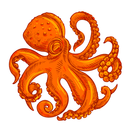 vector image octopus on white background
