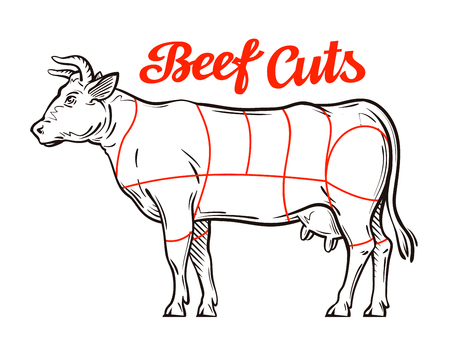 cutting meat: vector beef chart. meat cuts or butcher shop