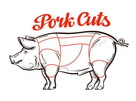 cut: vector pork, pig chart. meat cuts or butcher shop