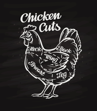 chicken cuts. template menu design for restaurant or cafe Çizim