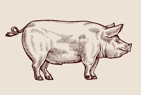 Sketch pig, pork. Hand drawn vector illustration Vettoriali