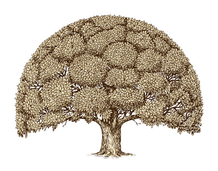 Vintage tree foliage. Hand drawn sketch old oak. Nature Vectores