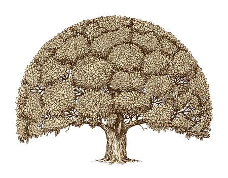 Vintage tree foliage. Hand drawn sketch old oak. Nature Vettoriali
