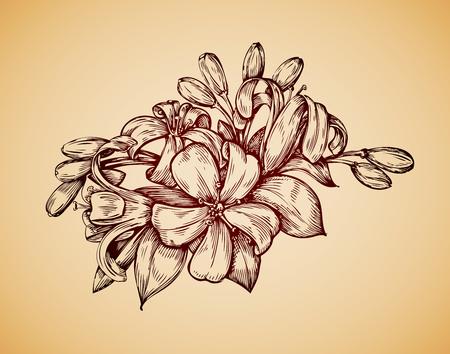 single flower: Vintage flower. Hand drawn retro sketch jasmine. Vector illustration