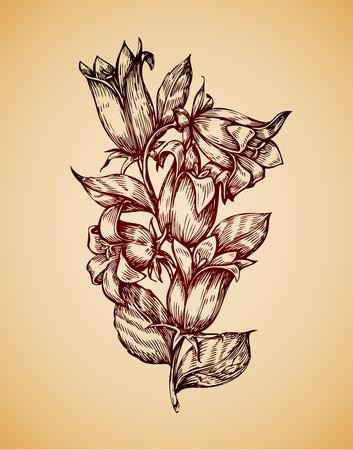 etched: Vintage flower. Hand-drawn retro sketch campanula. Vector illustration