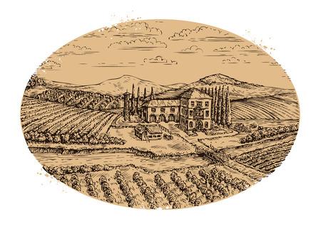 tuscany vineyard: Vineyard landscape. Hand drawn vintage farm agriculture. Vector illustration