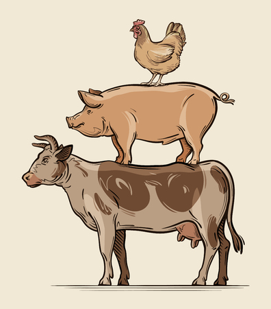 pork meat: Farm animals. cow, pig chicken beef pork meat