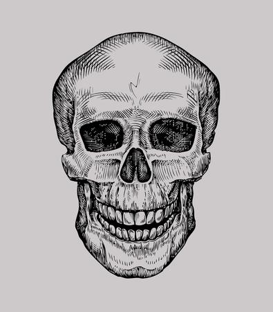 roger: Human skull. Hand drawn Jolly Roger. Sketch death, zombie vector illustration