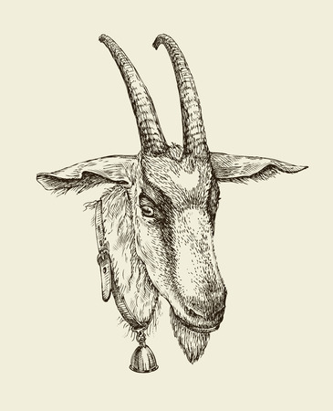 goat cheese: Hand-drawn goat. Sketch a farm animal. Vector illustration