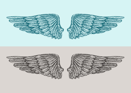 seraphic: Hand-drawn vintage angel wings. Sketch vector illustration