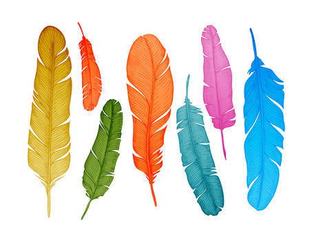 bird feathers: Hand-drawn feathers set on white background. Vector illustration
