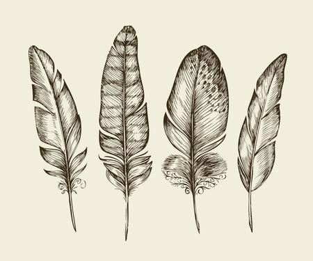 Met de hand getekende vintage vogelveren. Schets schrijven veer. vector illustratie