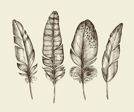 Hand-drawn vintage bird feathers. Sketch writing feather. Vector illustration