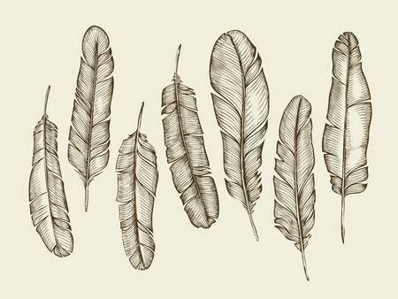 feathering: Hand-drawn sketch feathers, plumage, fluff. Sketch vintage writing feather. Vector illustration