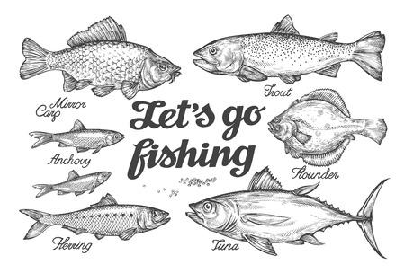 Pesca. pesce vettore disegnata a mano. Sketch trota, carpa, tonno aringhe passera acciughe
