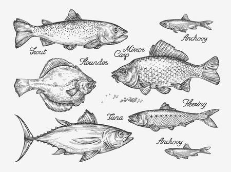 Hand-drawn fish. Sketch trout, carp, tuna, herring flounder anchovy Vector illustration