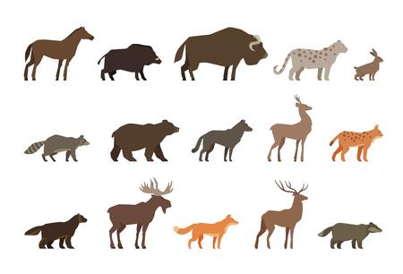 sanglier: Les animaux ensemble d'icônes de couleur isolé sur fond blanc