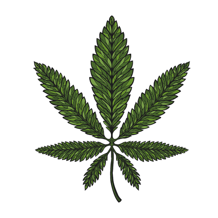 Hand-drawn leaf hemp, cannabis in decorative style. Marijuana vector illustration Illustration