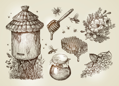 Hand drawn honey, beekeeping, bees. Collection sketch vector illustration Illustration