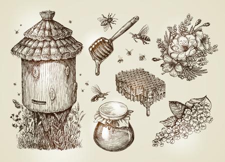 Miele disegnato a mano, apicoltura, api. Illustrazione vettoriale di abbozzo di raccolta Archivio Fotografico - 67209101