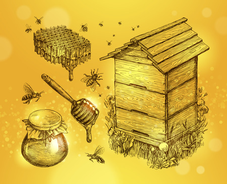 beeswax: Honey, mead, beekeeping. Hand-drawn apiculture sketch vector illustration