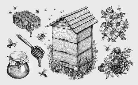 Honey, mead. Beekeeping apiculture bees sketch vector Çizim