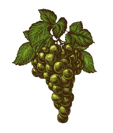 VID: Racimo de uvas verdes con hojas de vid. Racimo de uva. El alimento natural, postre aislado en el fondo blanco