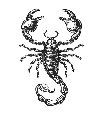 Sketch of scorpion. Tattoo animal. Vector illustration