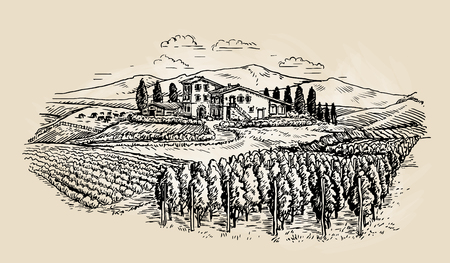 Farm sketch. Rural landscape with vineyard. Vector illustration