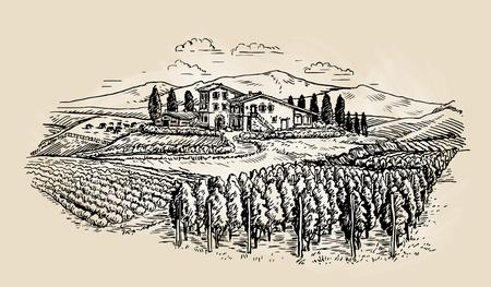 Farm sketch. Rural landscape with vineyard. Vector illustration
