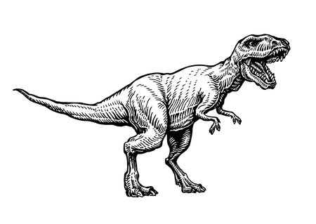 line drawings: Angry tyrannosaurus rex with open huge mouth, sketch. Hand-drawn carnivorous dinosaur. Animal vector illustration
